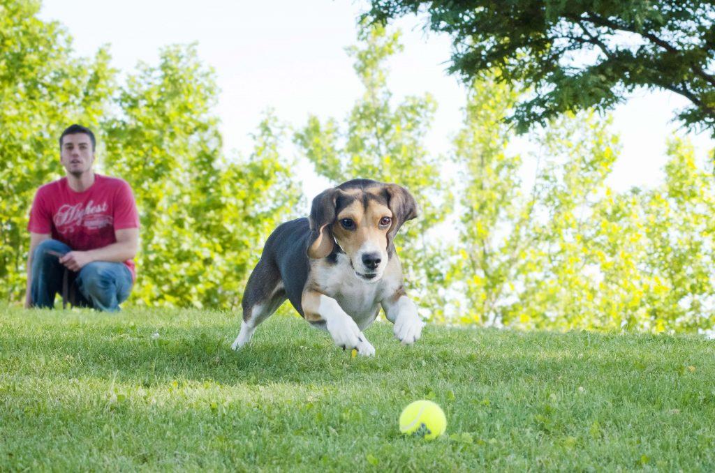 juguete kong para perros