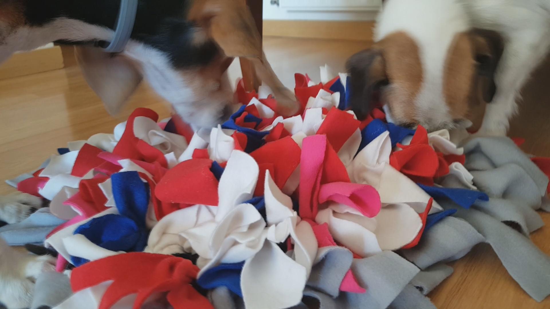 Snuffle Mat Alfombra olfato perro alfombra olfativa para perros comprar ofertas opiniones barato alfombras para perros alfombra olfativa snuffle mat alfombra de olfato para perros comprar alfombra de olfato para perros oferta Como hacer una alfombra olfativa para perros