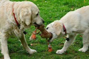 uguetes para perros cuerdas