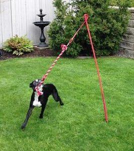cuerda de juguetes para perros caseros
