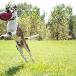 discos voladores para perros