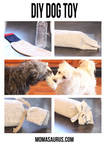 juguete casero para perro de botella y calcetin