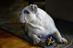 juguetes para perros comprar