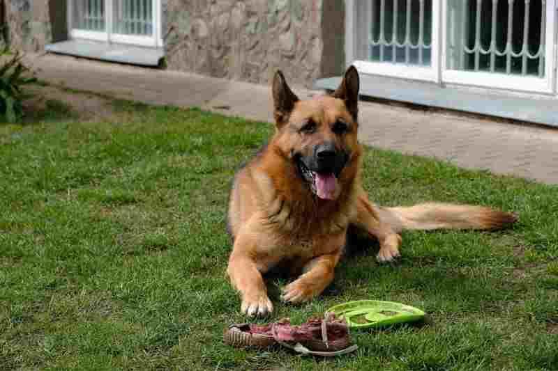 juguete para perro grande ofertas