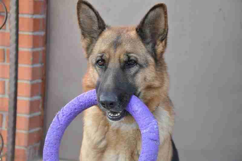 juguetes resistentes para perros grandes tienda online