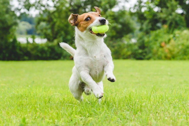 pelotas para perros comprar