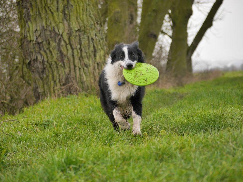frisbee para perros comprar