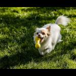 juguetes para perros pequeños comprar ofertas opiniones