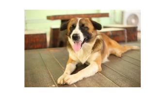 juguetes para perros ciegos comprar ofertas opiniones perros ciegos baratos precios juguetes para perros invidentes