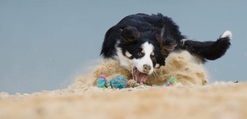 juguetes para perros medianos ofertas comprar opiniones barato perros medianos accesorios adiestramiento para perros medianos comprar