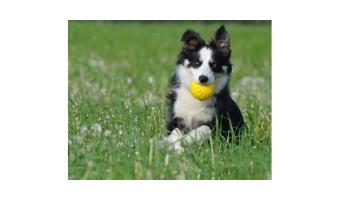 juguetes para perros medianos ofertas comprar opiniones barato perros medianos accesorios adiestramiento para perros medianos comprar ofertas