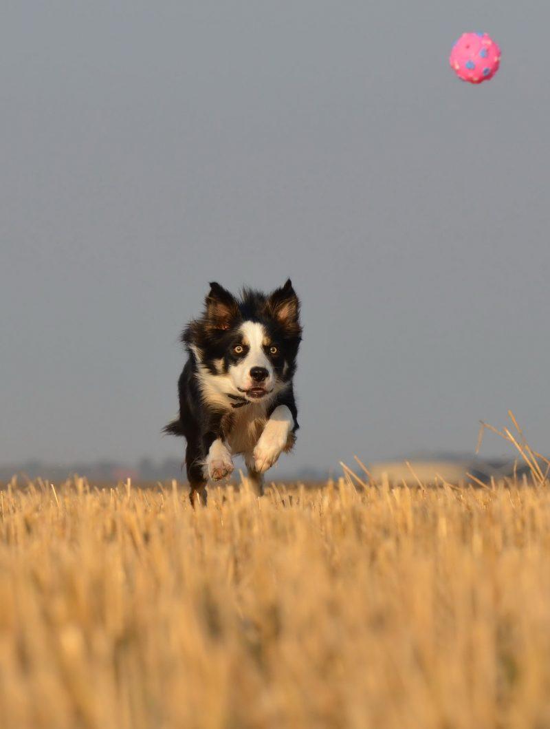 juguetes para perros medianos ofertas comprar opiniones barato perros medianos accesorios adiestramiento para perros medianos