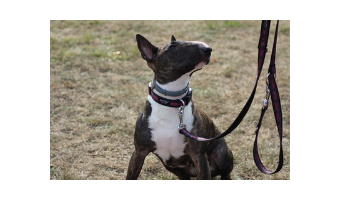 Comprar juguetes para perros de presa ofertas baratos precios opiniones pitbull bull terrier american Stanford comprar juguetes para perros pitbul