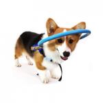 arnes para perros ciegos comprar precios ofertas opiniones comprar arnes y accesorios para perros ciegos aureola sensor collar baston