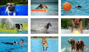 juguetes acuaticos para perros comprar oferta baratos precio opiniones comprar piscinas para perros piscina plegable rigida de plastico duro