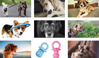 juguetes para perros ciegos accesorios para perros ciegos juguetes para perros cachorros comprar ofertas precios opiniones