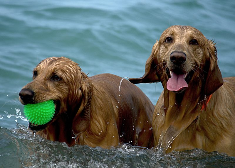 juguetes para perros hiperactivos comprar ofertas baratos precios opiniones comprar juguetes para perros hiperactivos o ansiosos comprar ofertas