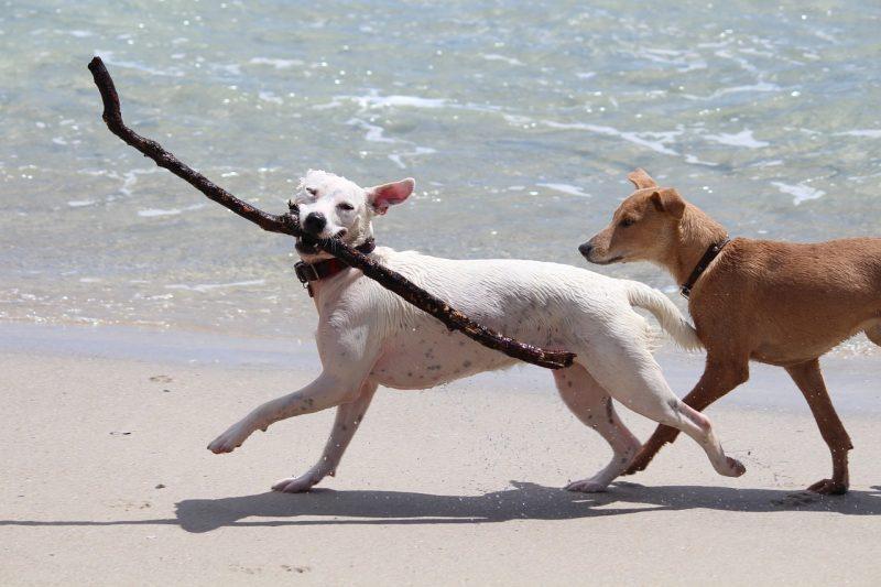 juguetes para perros hiperactivos comprar ofertas precios baratos opiniones comprar juguetes para perros hiperactivos ansiosos comprar ofertas