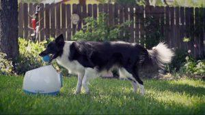 lanzador de pelotas para perros automático comprar ofertas baratos opiniones comprar lanzador de pelotas para perros pitbull grandes de presa