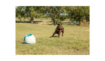 lanzador de pelotas para perros automatico comprar ofertas opiniones baratos cachorros grandes de presa pitbull