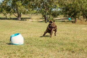 lanzador de pelotas para perros comprar lanzador de pelotas aunomatico grandes pequeños cachorros
