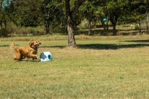 lanzador de pelotas para perros comprar ofertas baratos opiniones comprar lanzador de pelotas para perros automáticos grandes pequeños cachorros