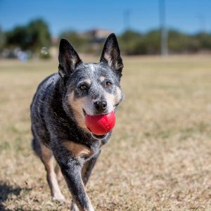 pelotas para perros kong ball comprar ofertas opiniones baratas comprar pelotas kong para perros kongball