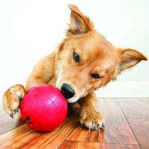 pelotas para perros kong biscuit ball comprar precios ofertas opiniones baratos comprar pelotas kong para perros kong biscuit ball