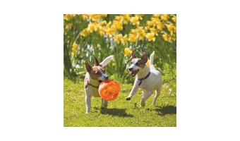 pelotas para perros kong comprar ofertas precios baratas comprar pelotas kong para perros grandes pequeños cachorros de presa pitbull duraderas resistentes