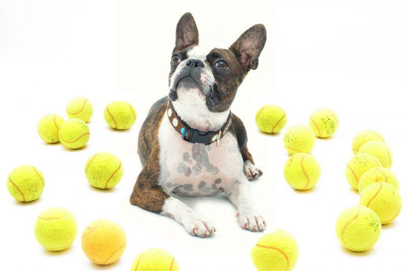 pelotas para perros irrompibles comprar ofertas precios opiniones baratas comprar pelotas para perros irrompibles resistentes para pitbull de presa