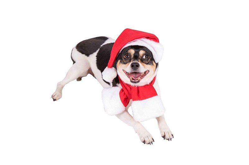disfraz de papa noel para perros comprar ofertas precios opiniones baratos comprar disfraces para perros de papa noel