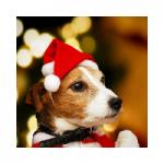 gorros de navidad para perros comprar ofertas precio opiniones baratos comprar gorros de navidad para perros grandes pequeños papa noel diademas