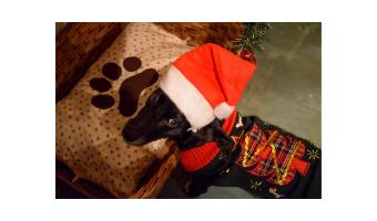 juguetes de navidad para perros comprar ofertas precio barato opiniones comprar juguete de navidad para perros regalo para perros