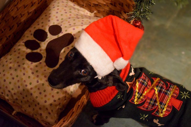 juguetes de navidad para perros comprar ofertas precios baratos opiniones comprar juguetes de navidad para perros grandes pequeños medianos resistentes