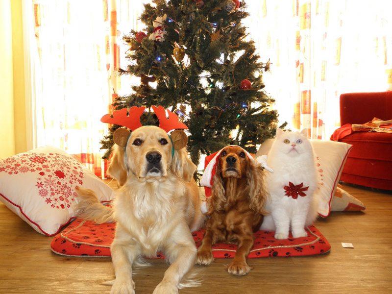 juguetes de navidad para perros comprar ofertas precios baratos opiniones comprar juguetes regalos de navidad para perros grandes pequeños resistentes pitbull de presa chihuahua