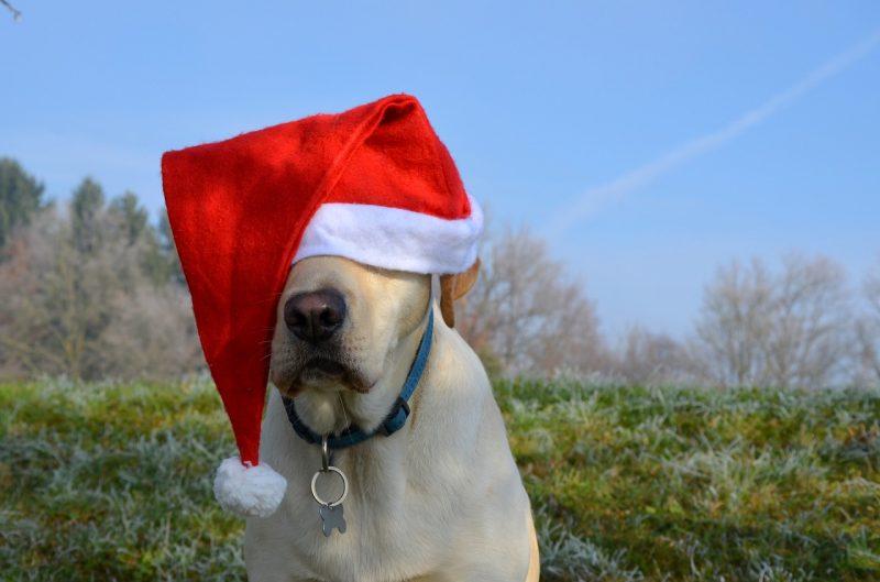juguetes de navidad para perros comprar ofertas precios baratos opiniones comprar regalos de navidad para perros juguetes navideños santa claus