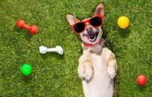 juguetes para perros chihuahua cachorros los mejores comprar oferta precio opiniones amazpn tienda online comparativa guia de compra foros