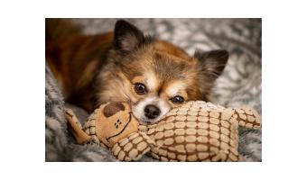 uguetes para perros chihuahua comprar ofertas precios barato opiniones comprar juguetes para perros pequeños chihuahua raza pequeña