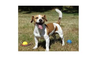 juguetes para perros jack russell comprar ofertas precios baratos opiniones comprar juguetes para jack russell pelotas resistentes frisbees cuerdas divertido