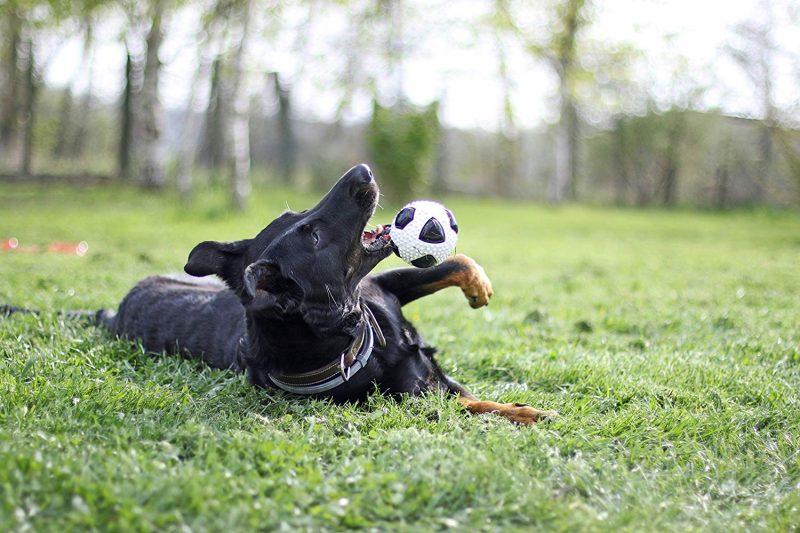 pelotas para perros con sonido comprar ofertas precios opiniones baratas comprar pelotas con sonido para perros grandes pequeños de presa pitbull ciegos resistentes