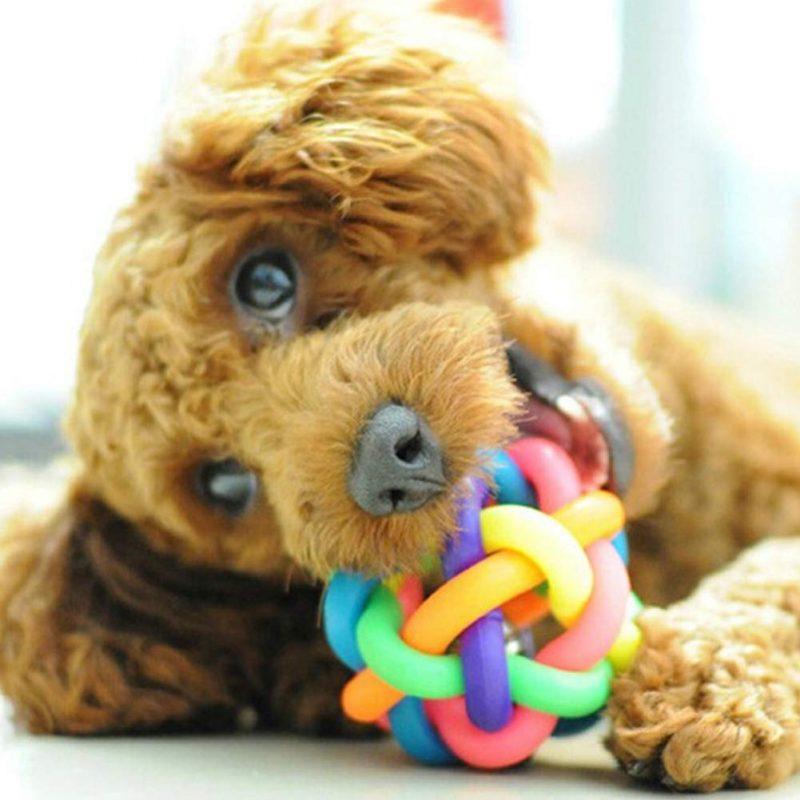 pelotas para perros con sonidos comprar ofertas opiniones baratas pelotas para perros ciegos grandes pequeños de presa pitbull comprar pelotas para perros con sonido cascabel pito chirriador