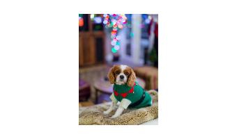 ropa de navidad para perros comprar ofertas precio opiniones barata comprar ropa de navidad para perros grandes pequeños chihuahua vestidos zapatos disfraces ropa navideña para perros