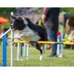 agility para perros pista clases juegos entrenamientos tunel slalon pasarela balancin circuito comprar ofertas precio tienda opiniones barato economico catalogo