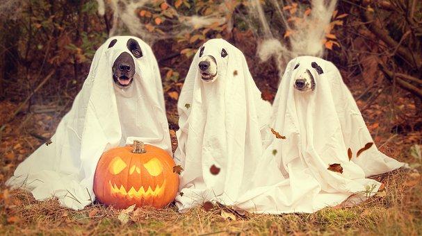 Disfraces de Halloween para perros comprar ofertas precios opiniones comprar barato económico tienda catalogo amazon chihuahua pequeños grandes salchichas labrador husky schnauzer pitbull