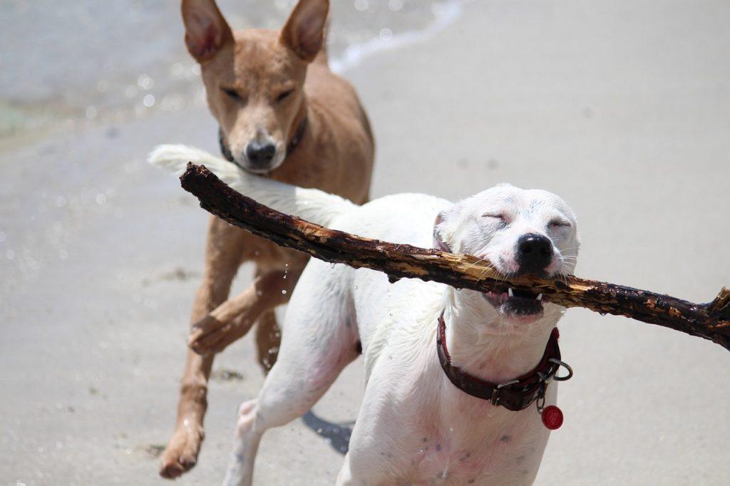 Como jugar con tu perro como hacer una alfombra olfativa para tu perro como hacer juguetes para perros cuales son los mejores juguetes para perros opiniones catalogos tienda comprar oferta