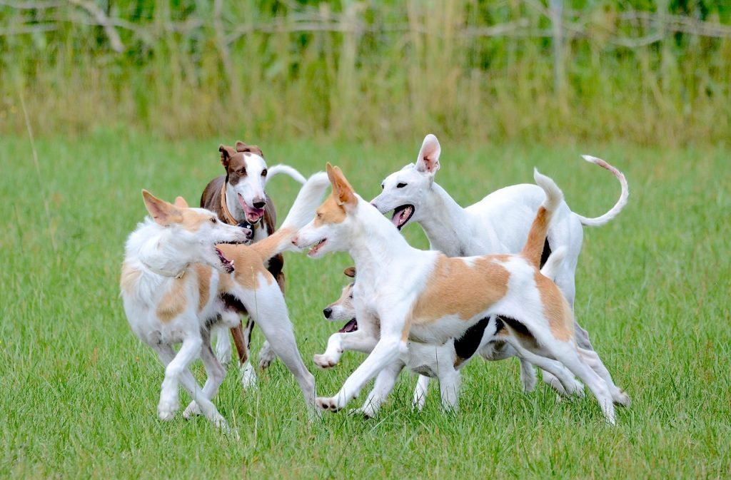 Como jugar con tu perro como hacer una alfombra olfativa para tu perro como hacer juguetes para perros cuales son los mejores juguetes para perros opiniones catalogos tienda oferta comprar