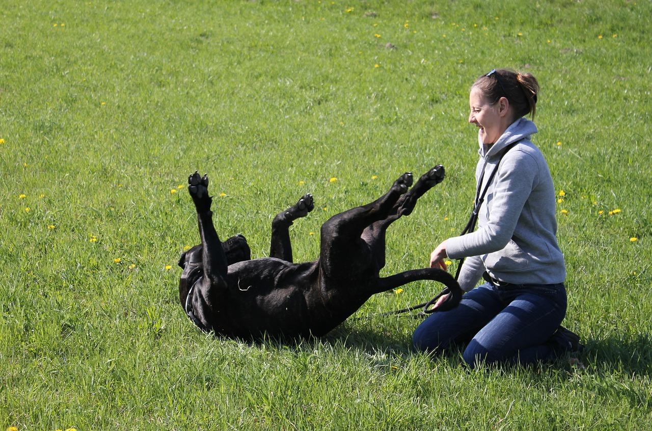 Como jugar con tu perro en casa sin juguetes cachorro como jugar con un perro ciego como jugar con mi perro como jugar con un perro