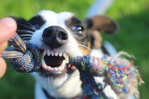 Como jugar con tu perro en casa sin juguetes cachorro como jugar con un perro ciego como jugar con mi perro jugar con tu perro en casa