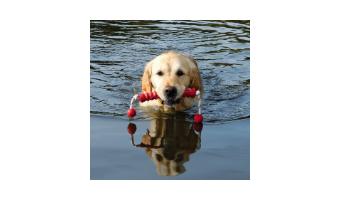 Juguetes acuáticos para perros Trixie perros catalogo barato comprar ofertas opiniones online pelotas para perros trixie caucho natural huesos para perros juguetes perros trixie