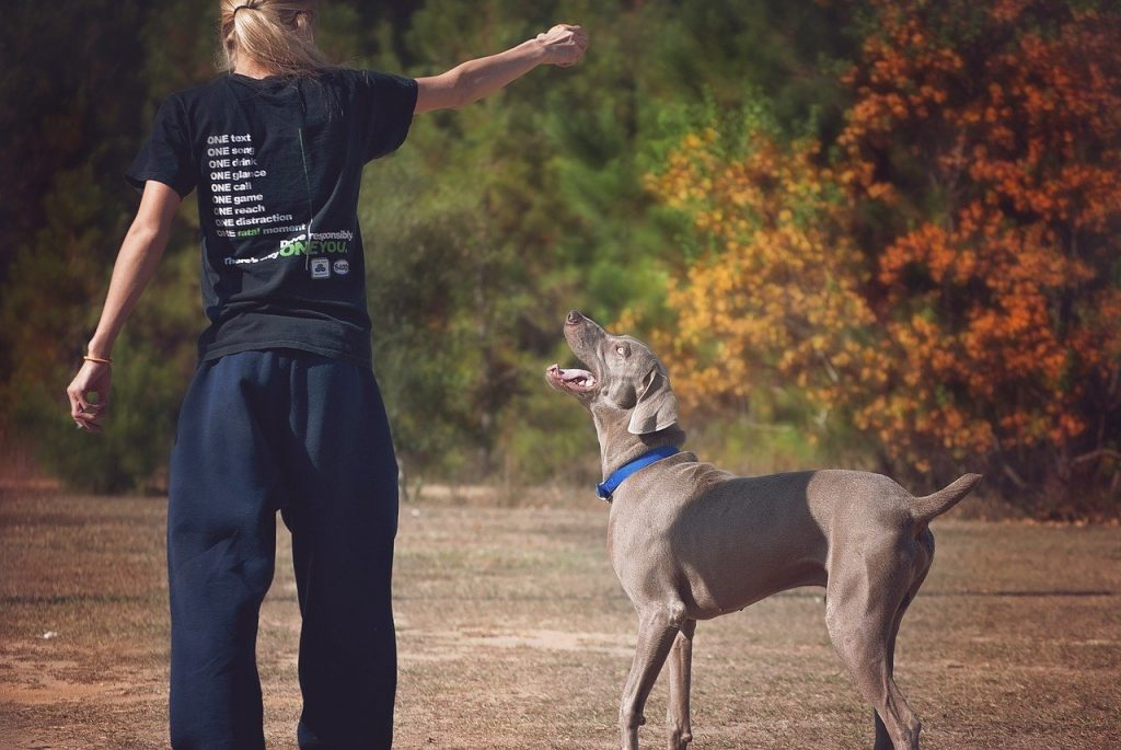 Juguetes para perros grandes Kong amazon resistentes irrompibles caseros baratos comprar ofertas precio tienda catalogo opiniones juguetes para perros pitbull de presa pelotas peluches para perros